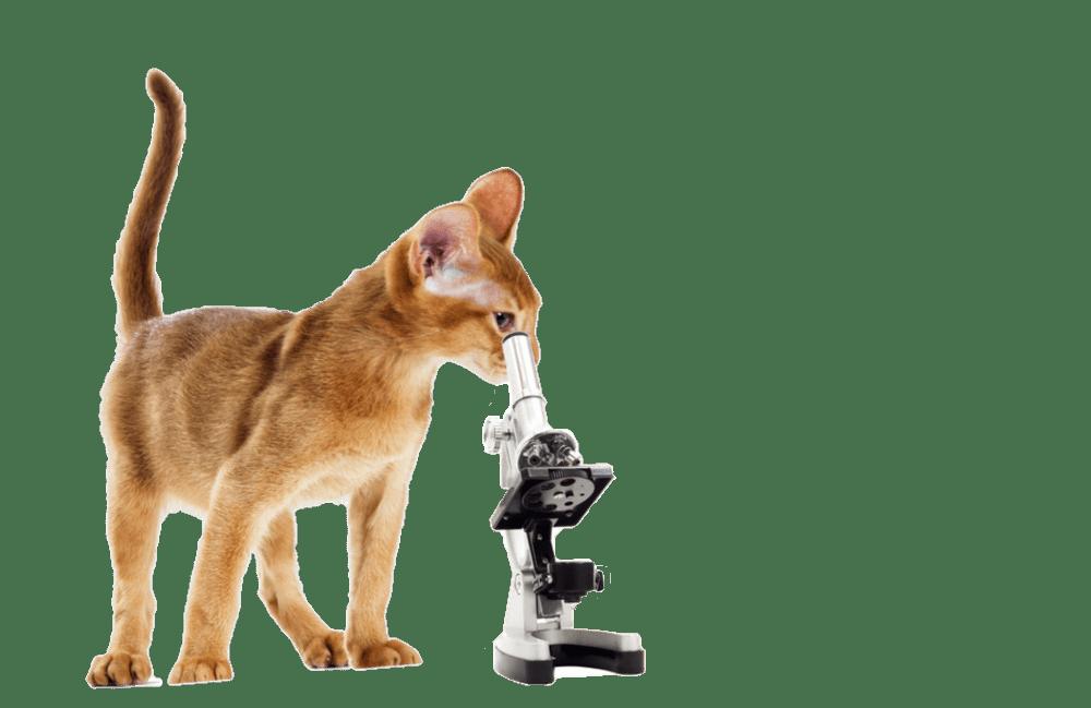 Анализы для кошек и котов в Москве и Люберцах