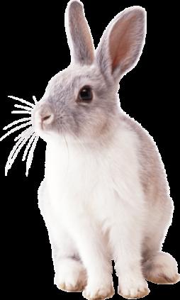 Услуги для кроликов