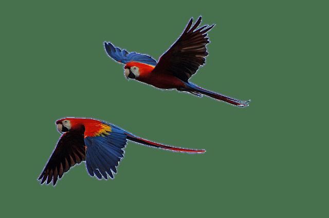 Услуги для птиц