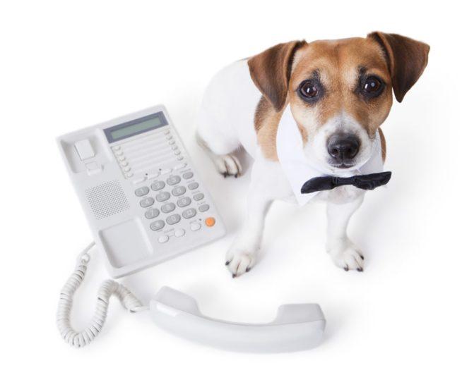 Вызов ветеринара на дом